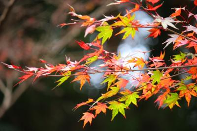 紅葉を愛でる高尾山