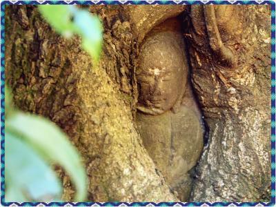 スダジイが包み込む仏 抱き地蔵 / 日本のアユタヤ 興禅院 へ