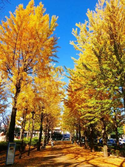 城北中央公園の黄葉
