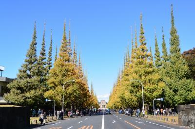 神宮外苑のイチョウ並木と上野公園の黄葉