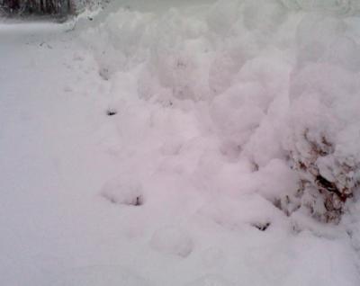 玄関前で20 cm超えの積雪、重~い湿雪です 週末別荘ライフ@信州野尻湖 2015 12月 1