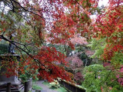 飯能・東郷公園の紅葉