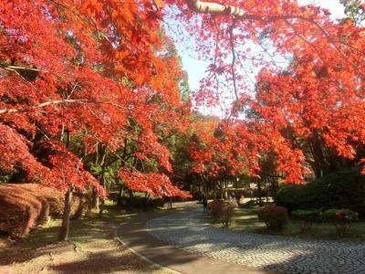 日本民家園(生田緑地)♪~2015~
