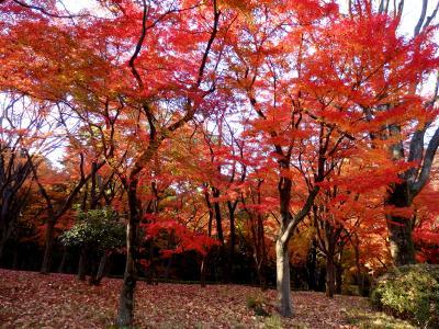 皇居乾通り・秋の一般公開と、今が見頃♪北の丸公園のもみじ林