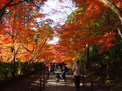 京都西山・光明寺の紅葉