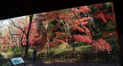 横浜の紅葉 2015 県立四季の森公園