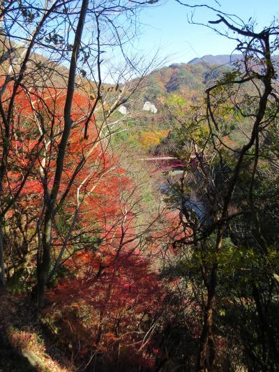 湖東三山チャリで周る、「東光寺~永源寺」紅葉を気待していたのですが(^^;)