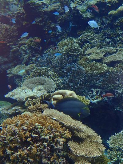 沖縄の旅(2)県立博物館と美ら海水族館