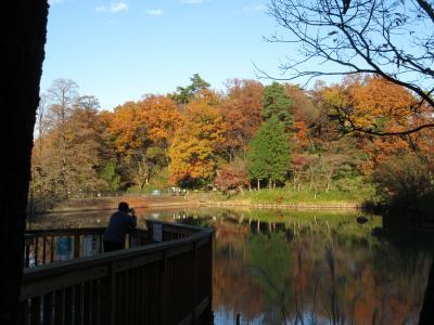 小さな旅 所沢・多摩湖の秋景色 Autumn color in my town Tokorozawa/Lake Tama