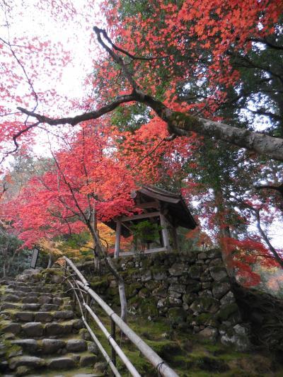 湖東紅葉の名勝、西明寺。紅葉と古刹の見事な共演でした。