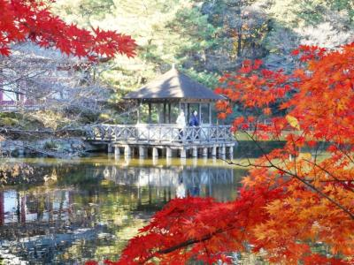 錦秋!--紅葉の石神井公園を往く