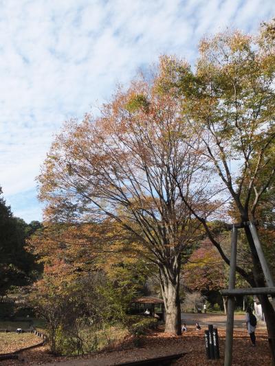 紅葉を見つけに四季の森公園え・ちょっと早かったかな