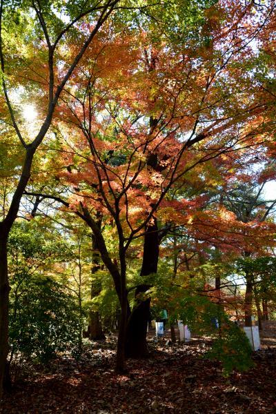 広々した自然たっぷりの森林公園の紅葉 2015
