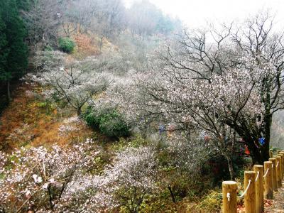 冬桜咲く桜山ハイキングを楽しむ