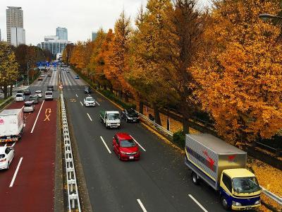 信濃町駅前の黄葉