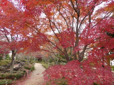 初冬の「川口グリーンセンター」 雅な紅葉♪