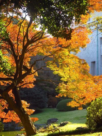 東京国立博物館-2  本館北側庭園 紅葉のころ散策 ☆茶室5棟を配して