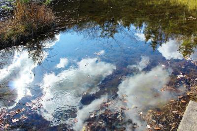 落ち葉さくさく 初冬の昭和の森を歩く♪