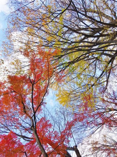 まだ紅葉の残る、初冬の『根津美術館 庭園』を散策