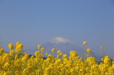 新春:吾妻山の菜の花ウォッチング