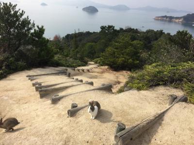 正月旅 うさぎの大久野島と尾道
