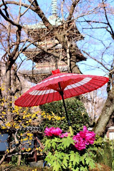 上野冬ぼたん鑑賞と谷根千散策
