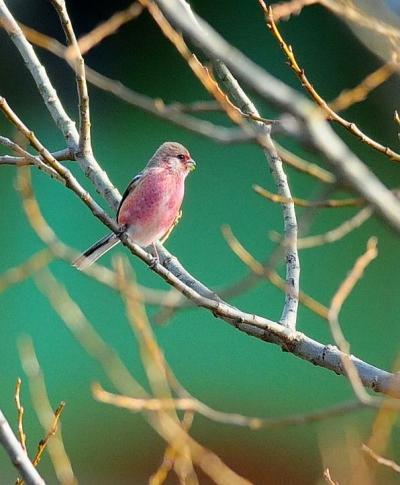 新春の探鳥記
