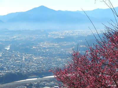 今年初めての宝登山蝋梅ハイキング③梅を眺める
