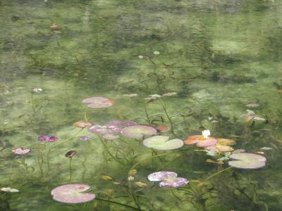 噂の岐阜県関市 「モネの池」見てきました。