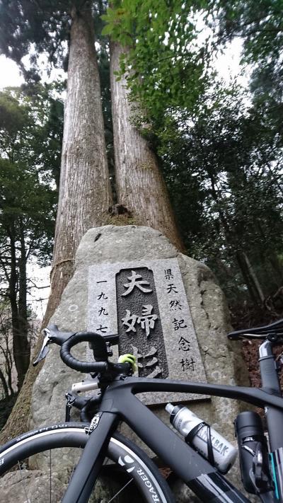 自転車ダイエット:夫婦杉を見に。