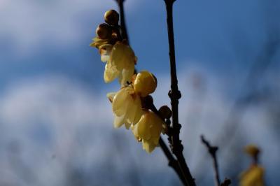野田市 一月 清水公園  花ファンタジア