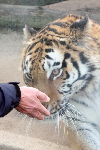 新春レッサーパンダ動物園遠征1府2県3園<京都・神戸・広島>(9)初の安佐動物公園(2)順路通りに動物たちに会いながら山道をゆったり進む~チータービューからニホンカモシカまで