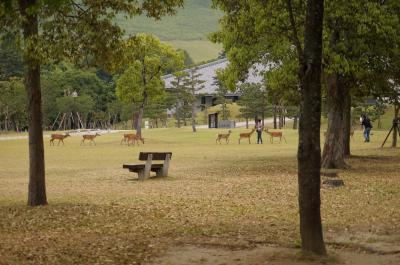 2013年 鹿と戯れながら若草山でピクニック