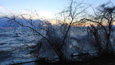 琵琶湖岸の樹氷