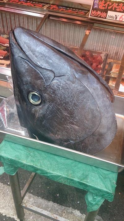 両親と行く東京築地お魚の旅