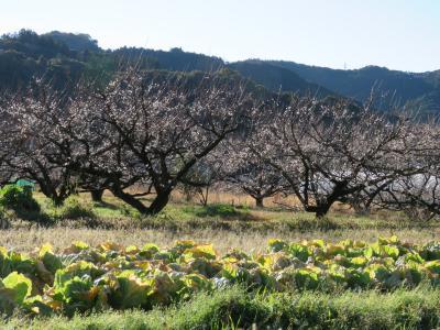 和歌山で一足早い'春'を見つけました【梅林*千畳敷*白浜温泉*湯浅城*醤油蔵】