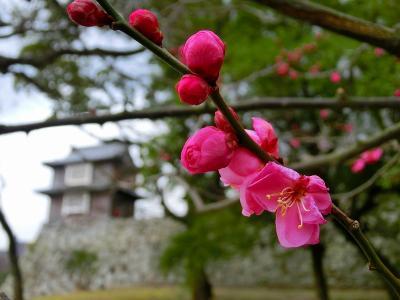 福岡旅行五日目:福岡城