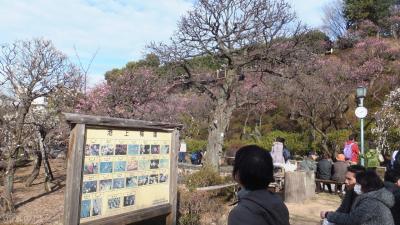 大田区立「池上梅園」に行ってきました。見頃には少し早く、3分咲きでした~。