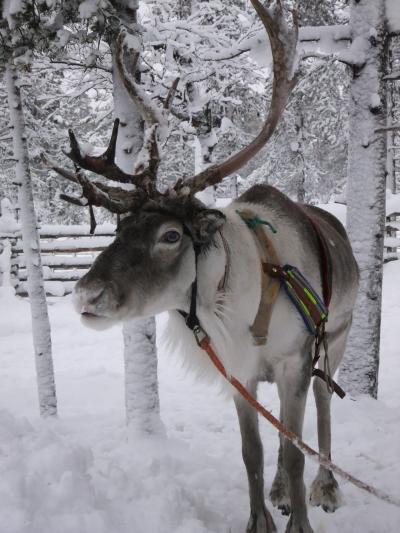 オーロラが見たくてフィンランドへ