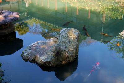 始めての 池上梅園 7分咲 下