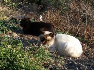 横浪スカイラインの猫とジョン万次郎漂流出航の地