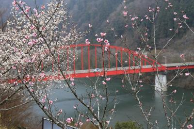 旅するイルカ♪ 梅だより 2016 Part5 奈良 月ケ瀬梅林へ