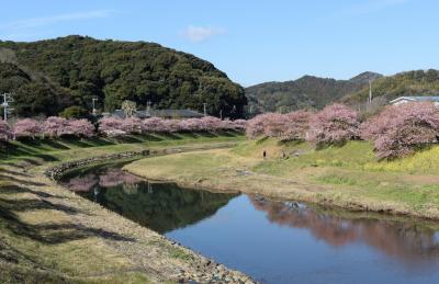 河津桜とみなみの桜 2日目
