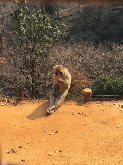 京の週末 ~おいしいもの食べたり、仏像見たり、サルに餌あげたり~