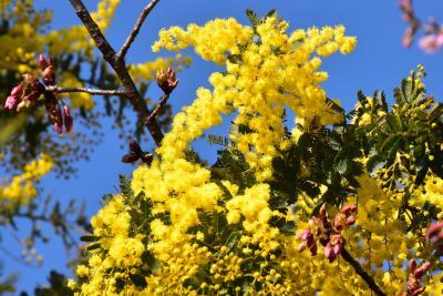 二ヶ領用水 春の花チラホラ 2016(川崎市中原)
