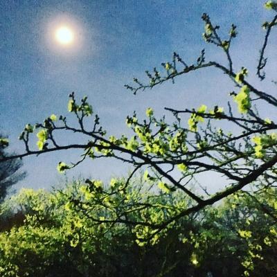 大宮で梅を見に行きました