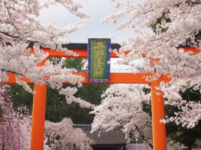 春の京都2014 一人旅  平野神社、千本釈迦堂、水火天満宮