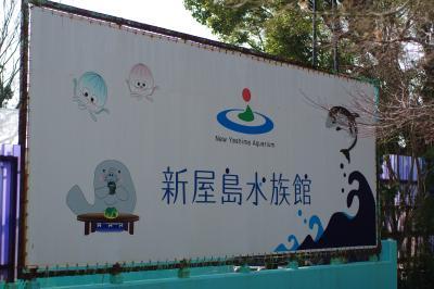 新屋島水族館のイルカショー