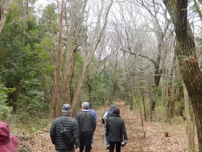 森のさんぽ道〔仮・川越森林公園〕を歩く