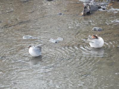 大堀川リバーサイドパークの野鳥たち